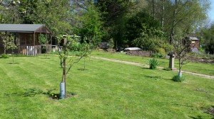 2014-04-13 Replanted orchard